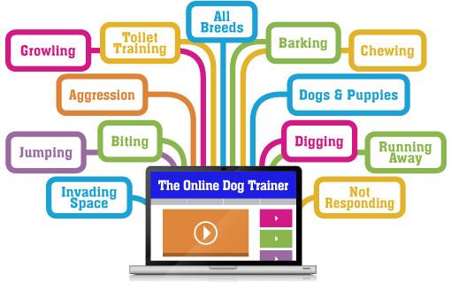 dog-behavior-training